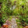 Footpath in the jungle - Stock Photo