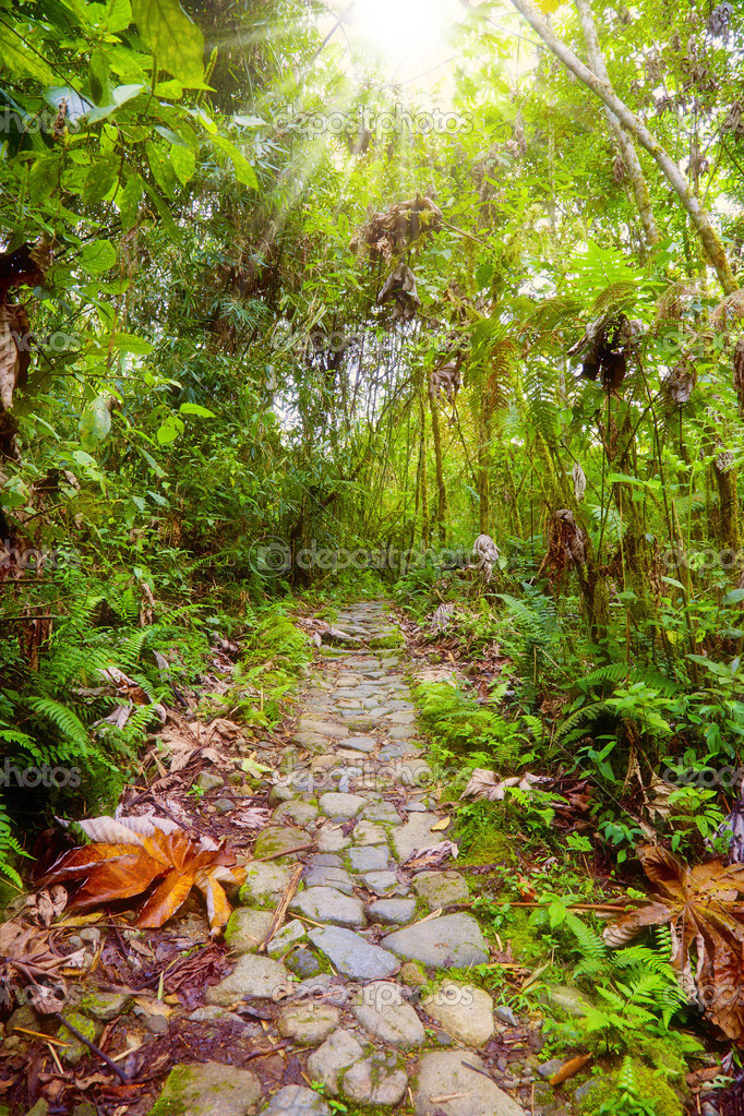 Footpath in the rainforest at Manu National Park, Peru — Stock Photo #2523965