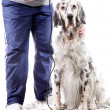 Stock Photo: Dog grooming
