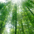Sunshine in forest — Stock Photo #2586613