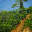 Stok fotoğraf: Tree on cliff