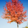 Stock Photo: Red tree