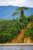 悬崖上的树 — 图库照片