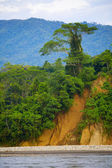 árvore em um penhasco — Foto Stock