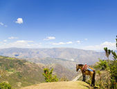 Mule and Andes — Stock Photo