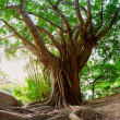 Tropical tree - Stock Photo