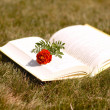 Stock Photo: Book and flower