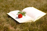 Book and flower — Stock Photo