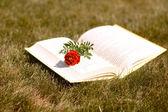 Livre et fleur — Photo