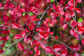 Red berry on a branch — Stock Photo