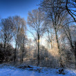 Stock Photo: Sun rays in a winter forest