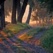 Stock Photo: Dawn in the forest