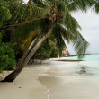 Beach with palms Maldives Indian ocean — Stock Photo
