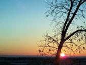 Sunrise — Stockfoto