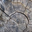 Petrified Tree Stump — Stock Photo