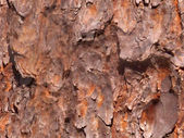 Seamless Bark — Stock Photo