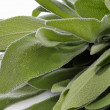 Stock Photo: Sage Closeup