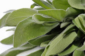 Sage Closeup — Stock Photo