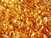 Zlaté listy — Stock fotografie
