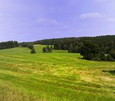 Field and meadow — Stock Photo