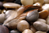 Feather and rocks — Stock Photo