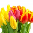 Spring tulips isolated — Stock Photo