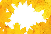 Yellow autumn fall leaf frame background — Stock Photo