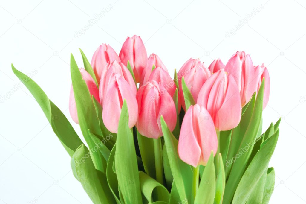 Fresh beautiful tulips isolated on white background — Stock Photo #2386831
