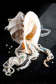 Jewelry And Shell — Stock Photo