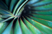 Spiral Palm — Stock Photo
