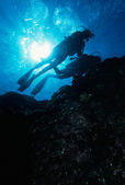 Diving the reef — Stock Photo