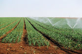 Irrigation of shoots — 图库照片