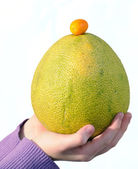 Pamelo and chinese orange on palm — Stock Photo