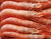 Shrimps. — Stock Photo