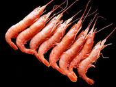 Frozen shrimps on black. — Stock Photo