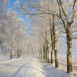 Frost covered birch tree — Stockfoto