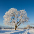 Frost covered tree — Stock Photo