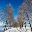 Frost covered birch tree allay in winter — Stock Photo