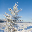 Frost covered christmas tree — Stock Photo