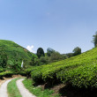 Cameron Highlands — Stock Photo