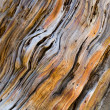 Old pine tree wooden texture — Stock Photo