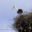 White Stork in nest — Stock Photo
