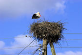 White Stork in nest — Foto Stock