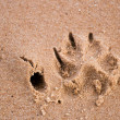 Dog paw print in sand — Stock Photo