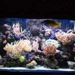 Aquarium background — Stock Photo #2510180