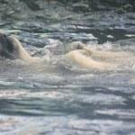 Ice bear — Stock Photo #2531369