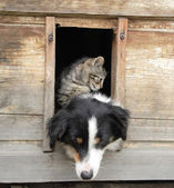 Cat and dog at home — Stock Photo