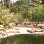 Crocodile farm — Stock Photo #2623571