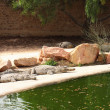 crocodile farm — Stock Photo #2623636