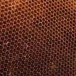 Honey texture — Stock Photo #2624358